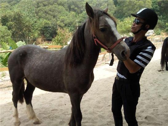 厦门哪里可以骑马