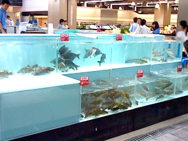 厦门海鲜池、鱼缸系列