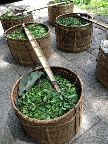 武夷岩茶---红地汇