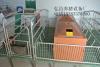 廠家供應復合產床 整體復合產床 養豬設備