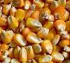 湖北宏发科技有限公司黄经理长期收购玉米,菜粕