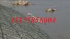 固堤护坝铅丝石笼 固提护岸铅丝石笼 固堤防汛铅丝笼