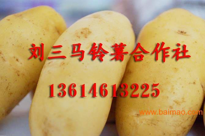 黑龙江土豆代办13614613225
