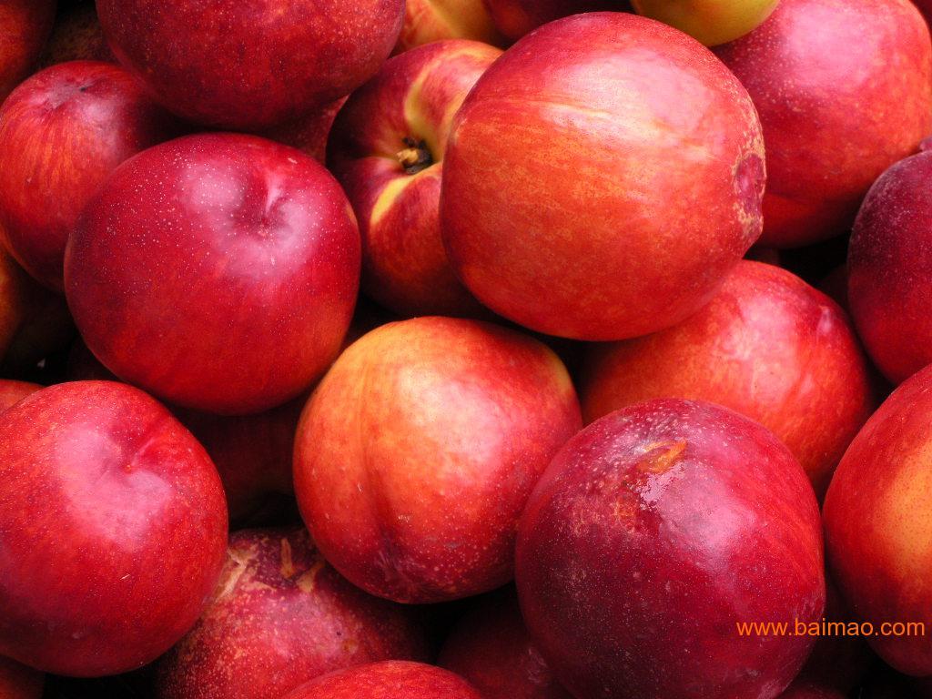 贵州桃树新品种 中油桃13号批发–贵州桃树新