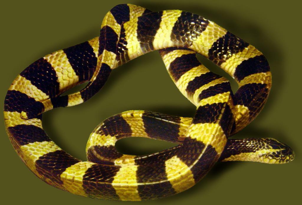 誰有蛇蛋圖網址_生態蛇苗.蛇蛋