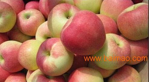 红又大的嘎啦美八苹果大量销售价格