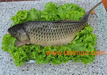 东海县美食,铁锅炖活鱼