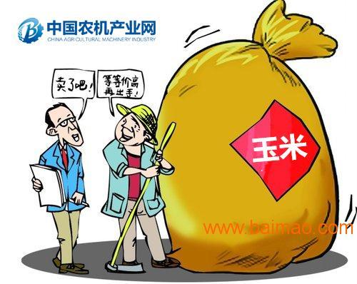 """东北玉米:致富经变""""紧箍咒"""""""