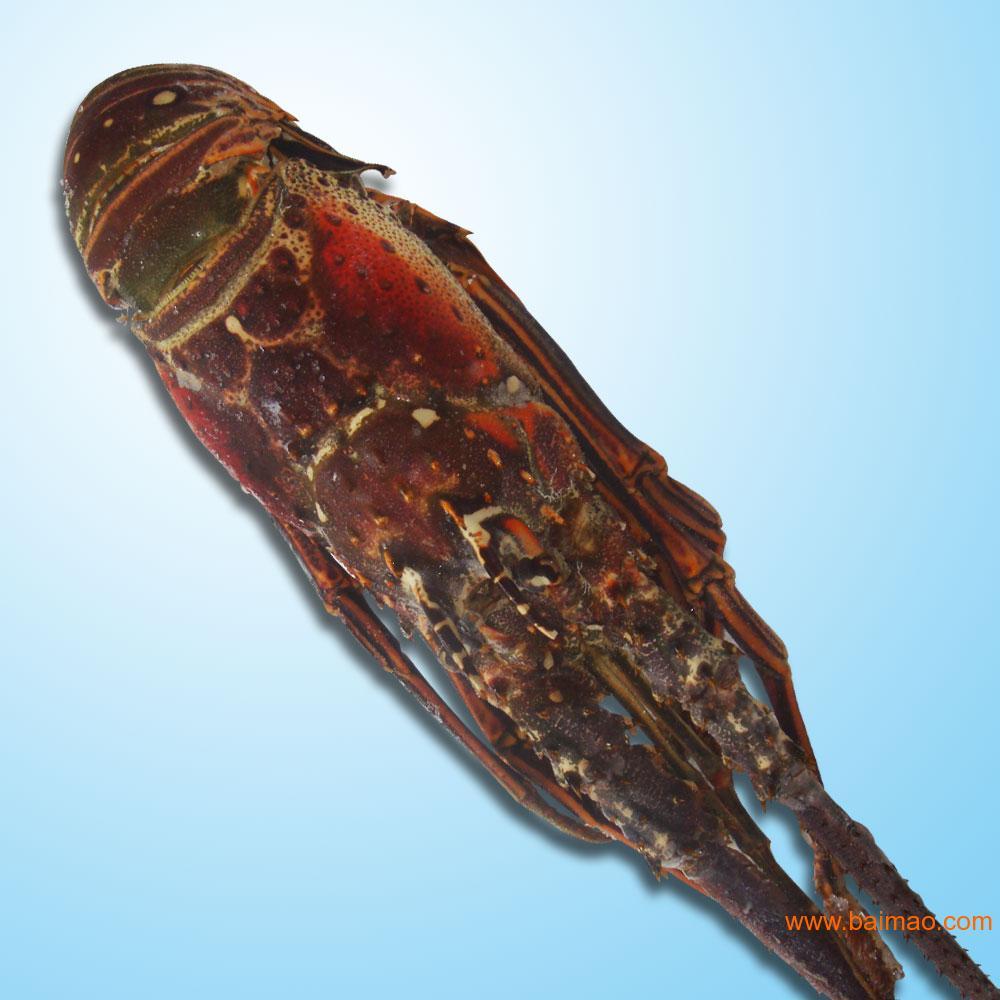 冷冻食品供应,古巴龙虾