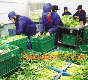 厦门蔬菜配送团队-欣厨艺
