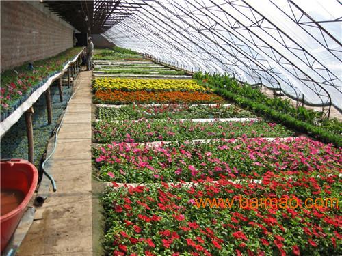 冬暖式大棚全钢架型-寿光市万禾农业科技奇迹电游娱乐