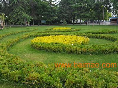 武威公园绿化养护方案,有品质的公园绿化甘肃提供