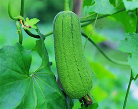 有机蔬菜供应
