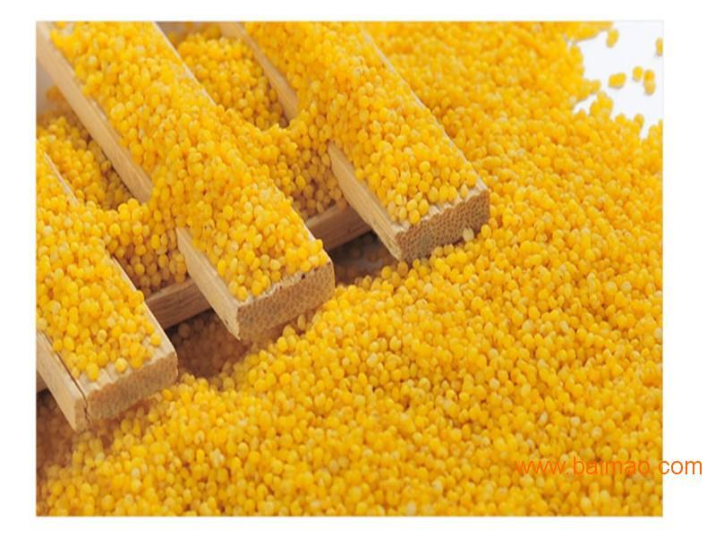 月子米,龙山小米,月子米价格,月子米的好处,