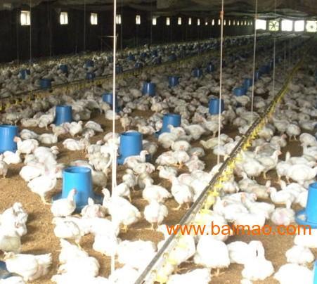 养鸡专业合作社的业务范围是什么?