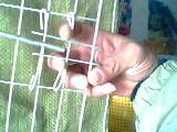 鸡鸽兔笼狐狸笼鹌鹑笼料盒食盒饮水器围墙网养殖网
