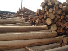 东莞马达加斯加黄檀进口流程 手续 费用 单证 税金
