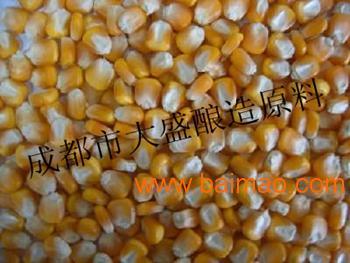 大盛常年现款求购求购玉米小麦高粱大米等原料
