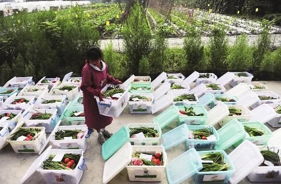 生鲜蔬菜配送上门
