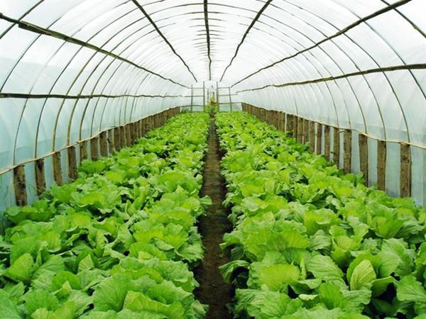 厦门绿色蔬菜供应