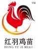 山东红羽公鸡苗孵化场注册商标